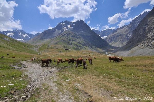 hory a fauna